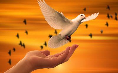 Cultura e cura della pace